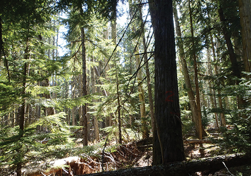 TDB Forestry